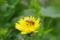 ミツバチ_20130324
