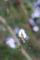 ジョロウグモ_130915