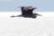 アオサギ_141223-5