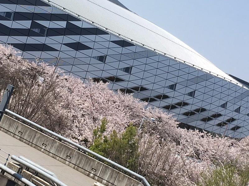 N49からの桜