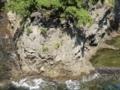 魚見岬の溶岩流