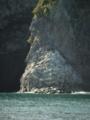 魚見岬の柱状節理