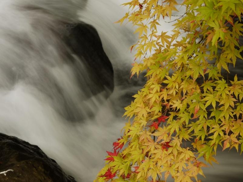 f:id:qshiro:20121201115218j:image:w360