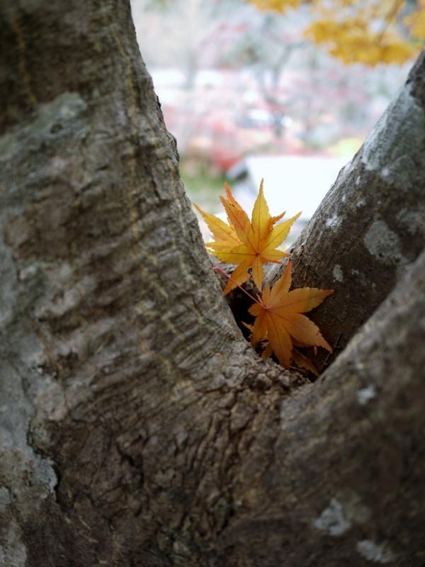 f:id:qshiro:20121202192505j:image:w360