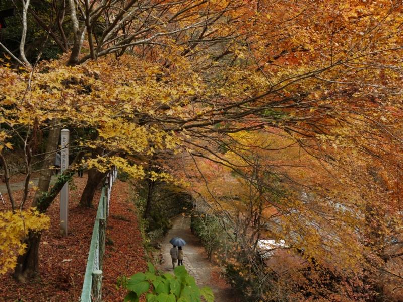 f:id:qshiro:20121202192511j:image:w360