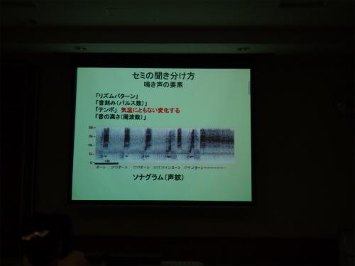 aP8122194.jpg