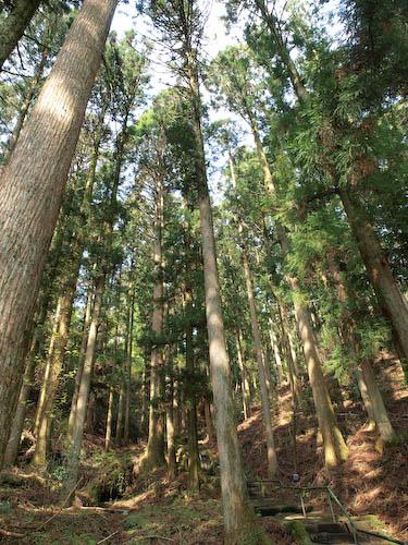 御岳権現社の自然林