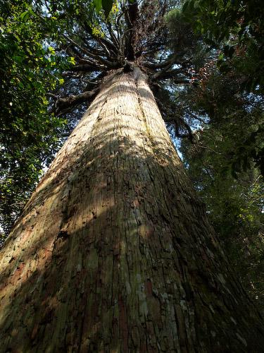 市房神社の杉並木