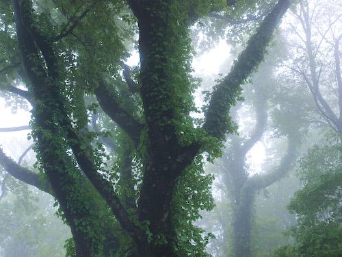犬ヶ岳の原生林