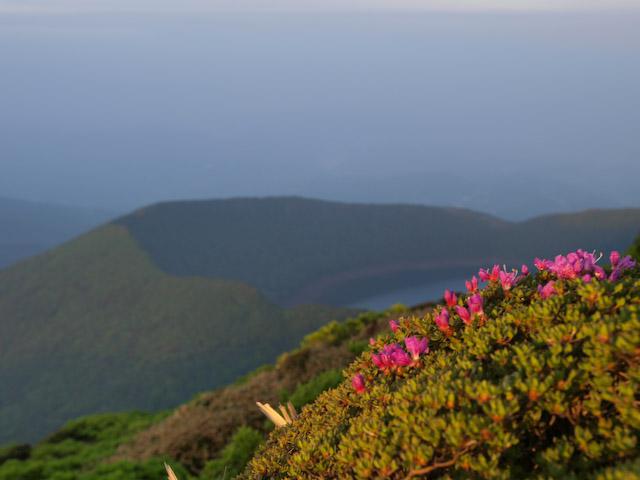 韓国岳のミヤマキリシマはまだまだ...