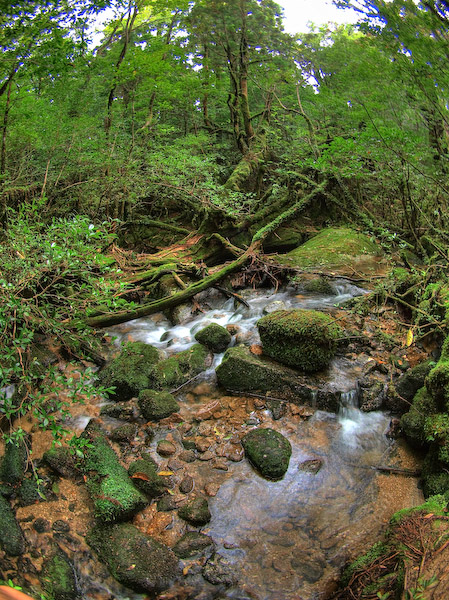 原生林歩道を流れる小川