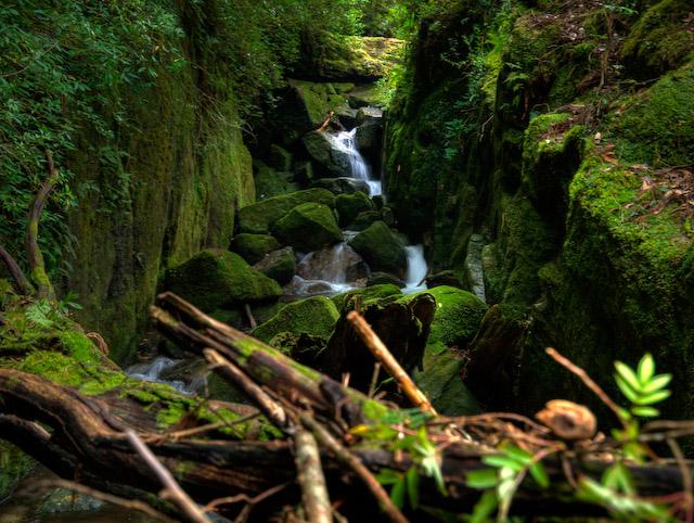 原生林歩道の渓流