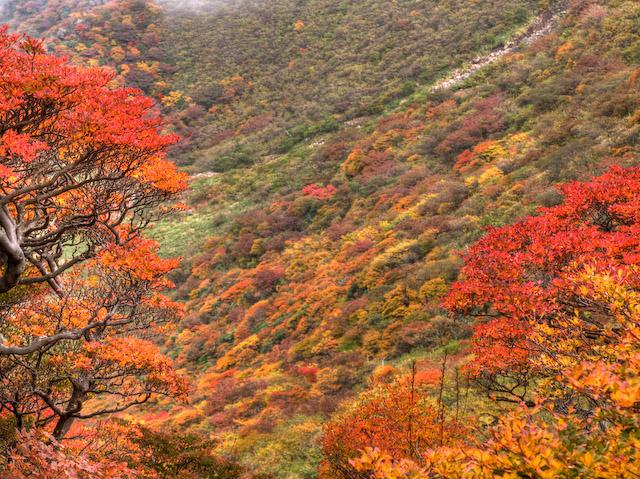 ドウダンツツジと本峰斜面の紅葉