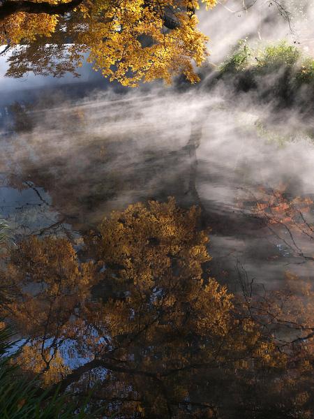 金鱗湖の光芒