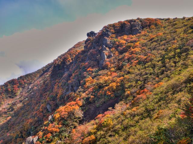 本峰中腹斜面の黄葉
