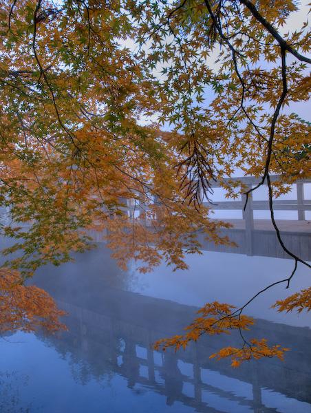 金鱗湖とモミジ