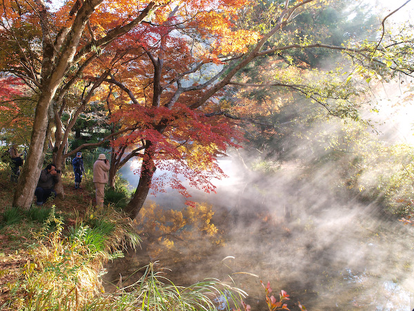 金鱗湖の紅葉