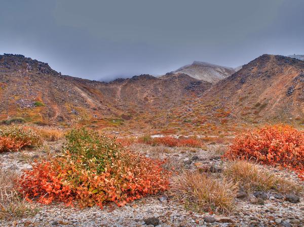 北千里浜の草紅葉