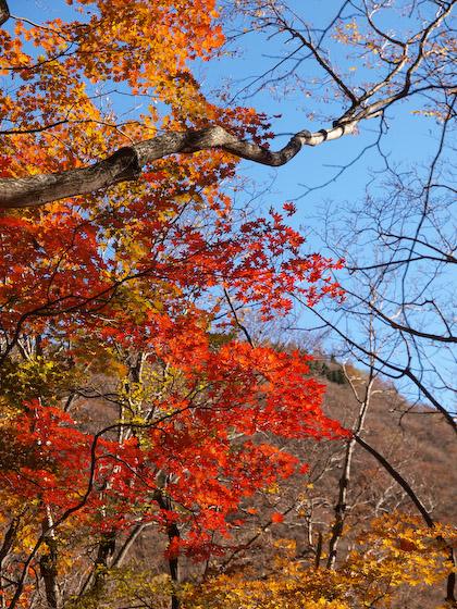 鳴子川の紅葉