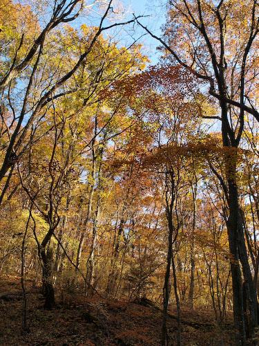 鳴子川の林