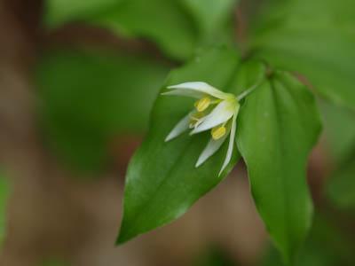 倉木山の花2