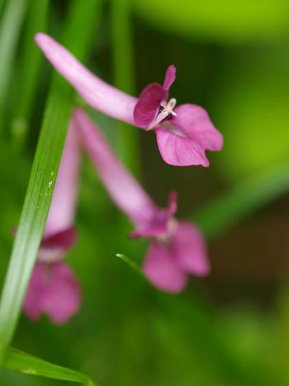 倉木山の花4