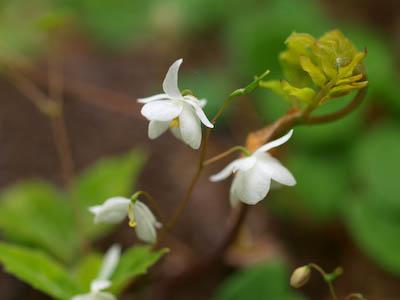 倉木山の花3