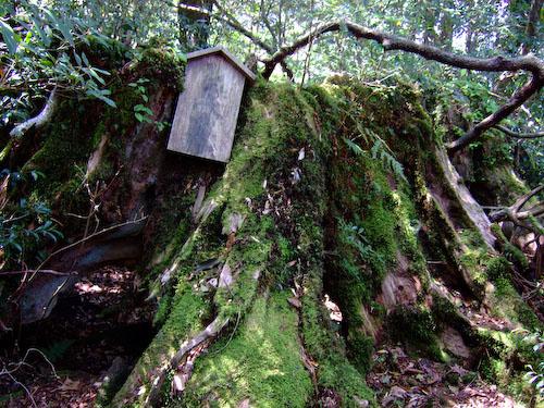 しるべの木
