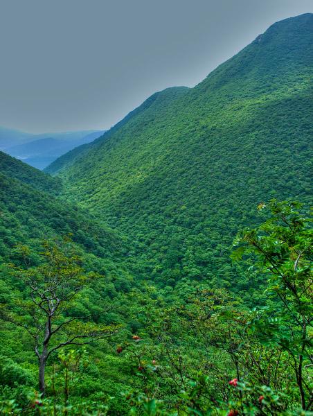 黒岳とセリ口谷