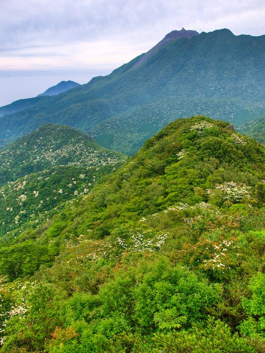 九千部岳より眺める普賢岳