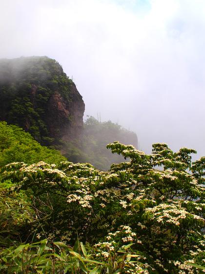 ウラ谷鼻とヤマボウシ