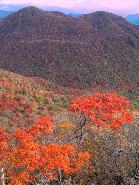 紅葉した黒岳を眺める