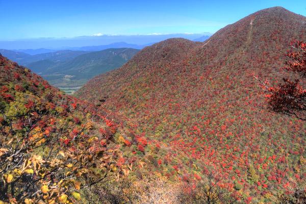 黒岳とセリ口谷の紅葉