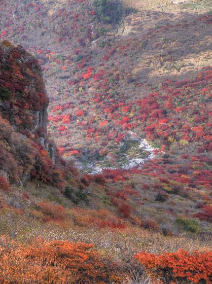 北峰西、雨が池の紅葉