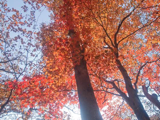 大船林道の紅葉