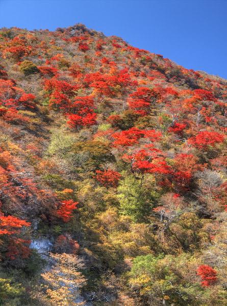 大船山の南斜面の紅葉