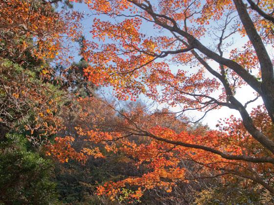釈迦ヶ岳の紅葉