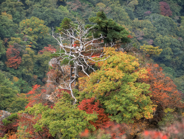 白骨化した木 HDR