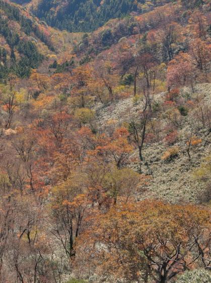 釈迦ヶ岳の南斜面