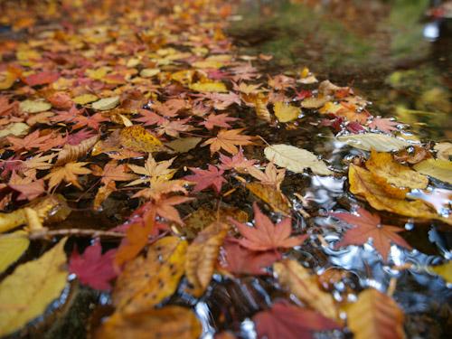 水辺の落ち葉、