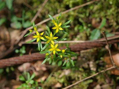川上渓谷の花