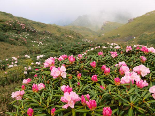 霧の永田岳