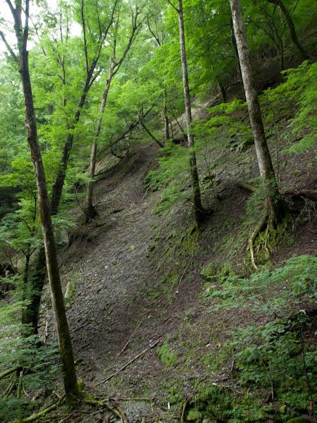 国見岳の自然林