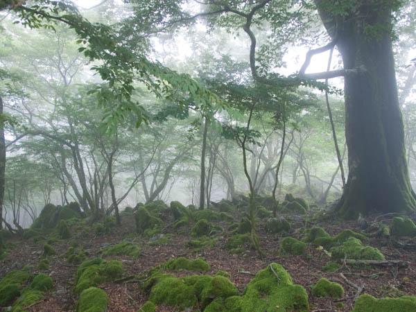 カルストの森