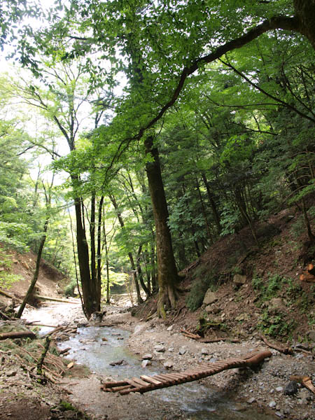 球磨川源流の丸木橋