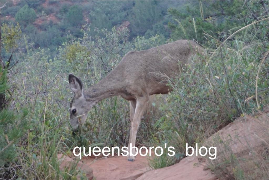 f:id:queensboro:20190316045432j:image