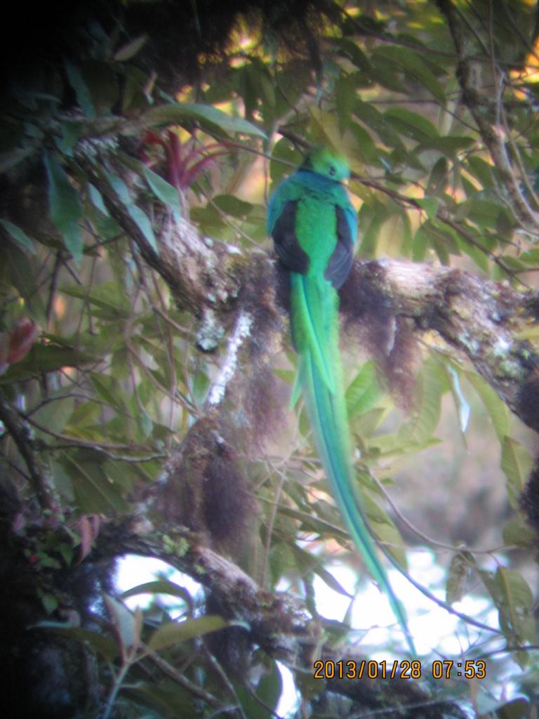 f:id:quetzal2013:20180218171850j:plain