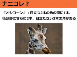 f:id:quizutaikai:20200302103645p:plain