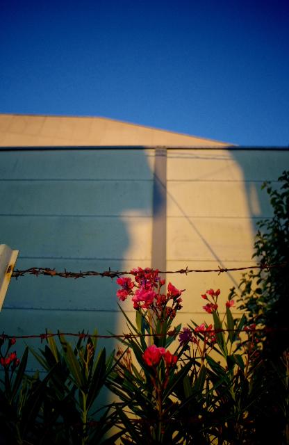 6:38 pm 夏に咲く花の画像