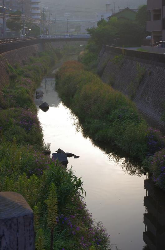 「わざわざ散歩しに行く」In Kagoshima! 6:42 am ~ 6:43 am ~ 6:43 amの画像